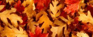 blaadjes herfst