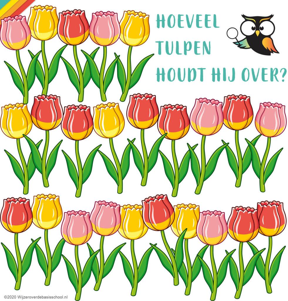 26-tulpen