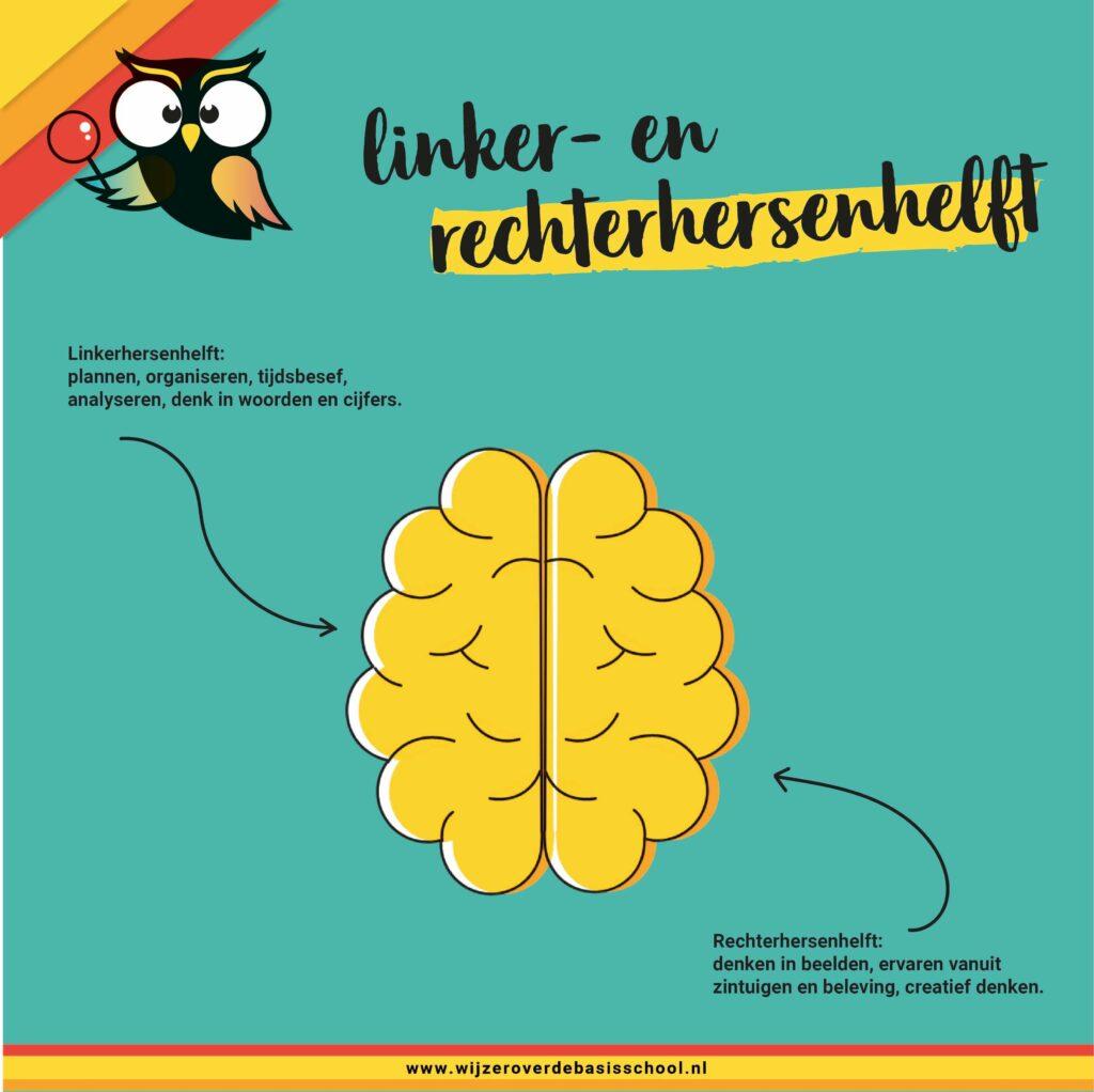 beelddenken-hersenhelften